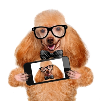 iStock_dog_with_glasses